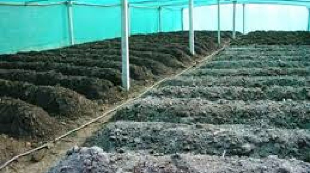 How to Start Vermicompost Fertilizer Production Business - Plan Guide