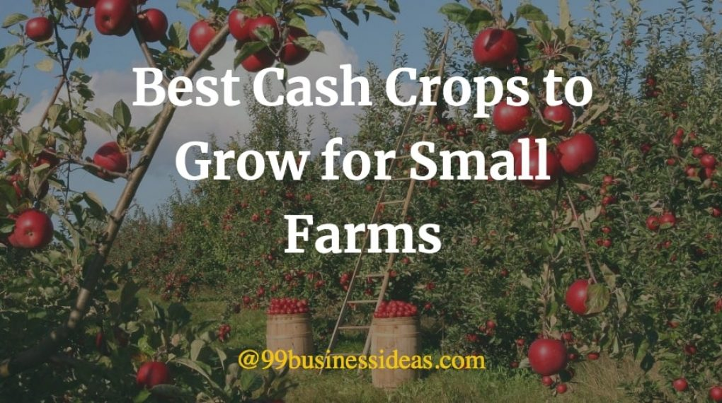 best cash crops for small farms