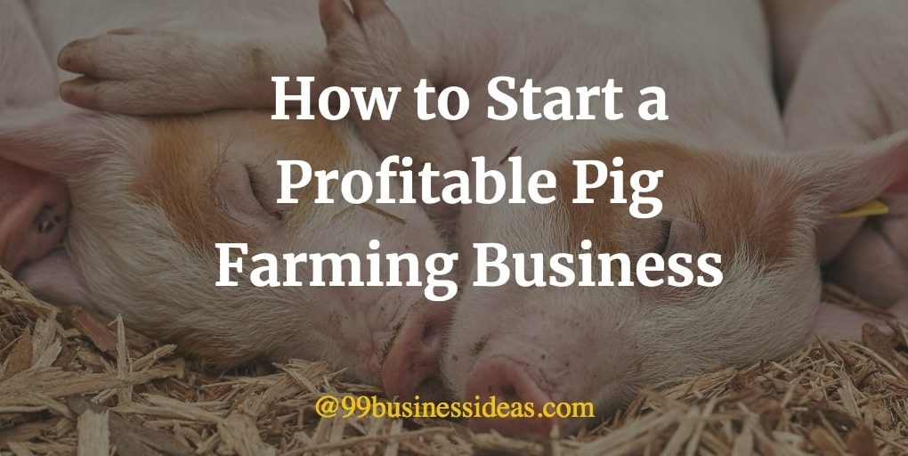 how to start pig farming business