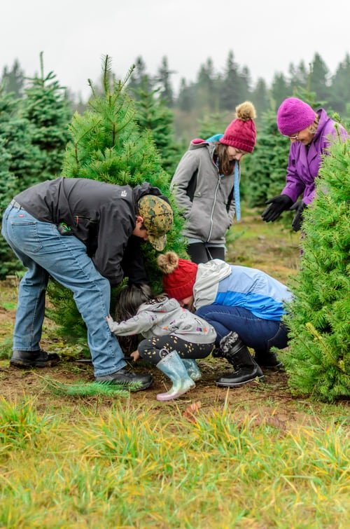 profitable christmas tree farm