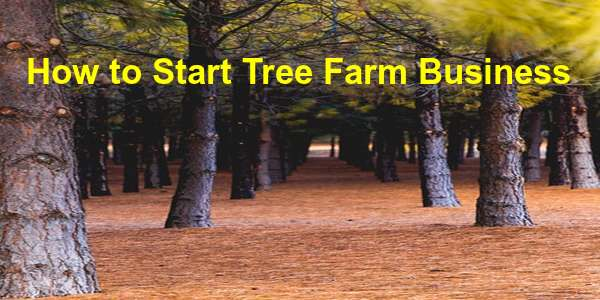 how to start tree farm business with high profit margin