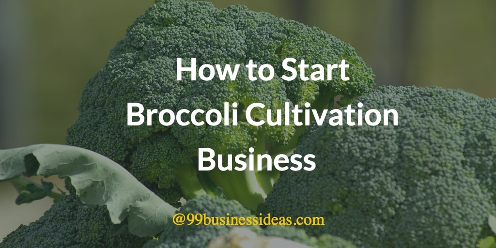 how to start broccoli cultivation business
