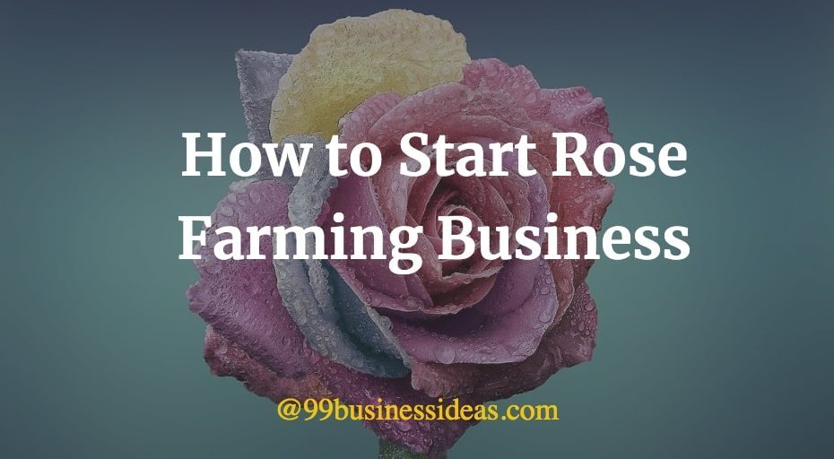 how to start rose farming business